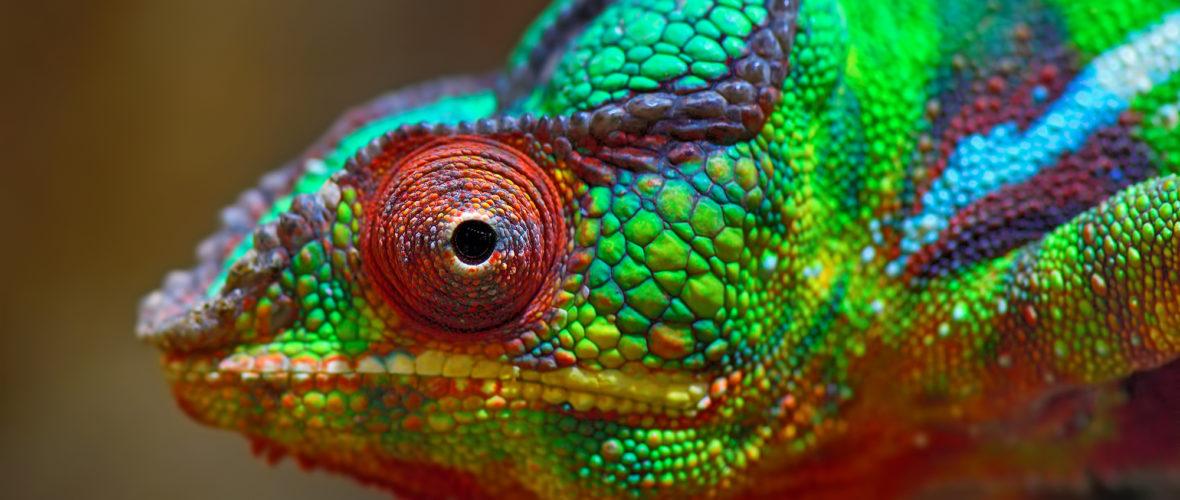 Die Evolution des Auges: Eine kleine Einführung in die Geschichte