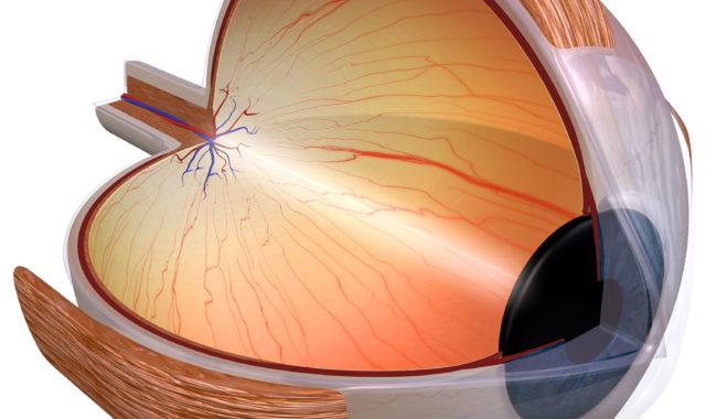 Die Netzhaut des Auges: Aufbau und Funktion