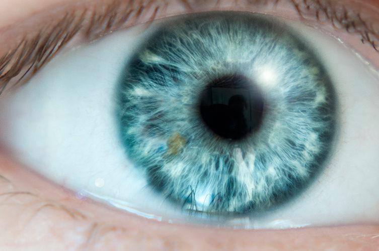 Das Auge: Bindehaut, Hornhaut und Regenbogenhaut